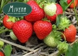 Sadovnikoff - smart fertilizers Mivena (official dealer)