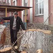 Спил деревьев. Обрезка деревьев. Корчевание пней